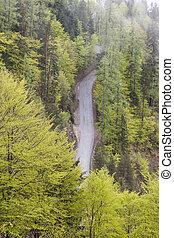 antena, route., kraj, jednorazowy, las, prospekt