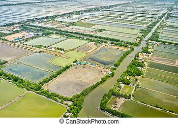 antena, tarasy, pole, tajlandia, ryż, prospekt