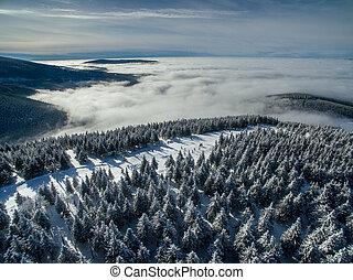 antena, zima, -, śnieg, drzewa, las, pokryty, prospekt