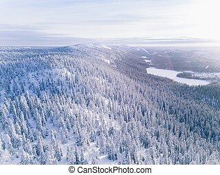 antena, zima, snow., las, pokryty, prospekt