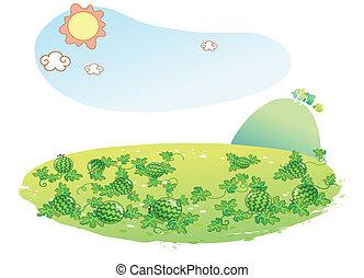 arbuz, ogród, krajobraz