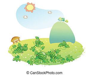 arbuz, ogród