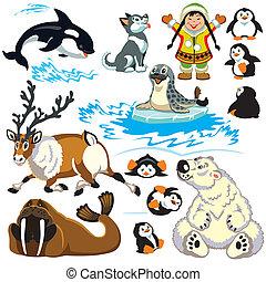 arktyka, komplet, zwierzęta, rysunek