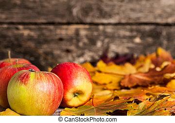 autumn odchodzi, brzeg, jabłka, klon