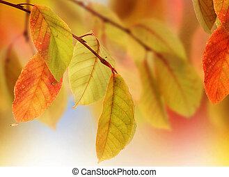 autumn odchodzi, projektować