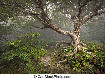 błękitne góry, urwisty, grzbiet, spooky, fairytale, nc, drzewo, pełzający, kaprys, asheville, mgła, las, appalachian, północ, ogrody, krajobraz, carolina