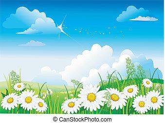 błękitne niebo, chamomile