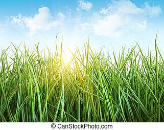 błękitne niebo, przeciw, mokry, wysoka trawa