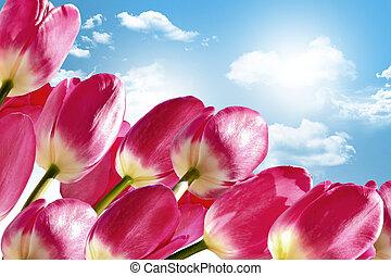 błękitny, chmury, wiosna, niebo, tło, tulipany, kwiaty