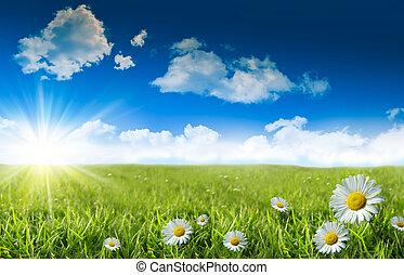 błękitny, dzika trawa, niebo, margerytki