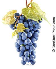 błękitny, grape odchodzi, odizolowany, owoce, biały