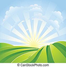 błękitny, idylliczny, pola, światło słoneczne, niebo, promienie, zielony