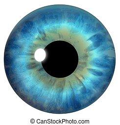 błękitny, irys, oko