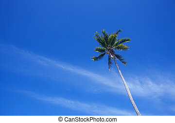 błękitny, orzech kokosowy, niebo
