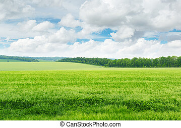 błękitny, pole, niebo, zielony