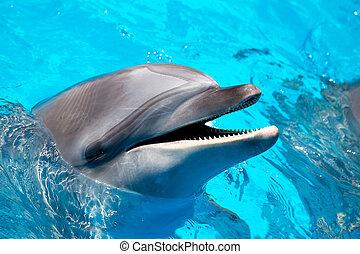 błękitny polewają, głowa, delfin