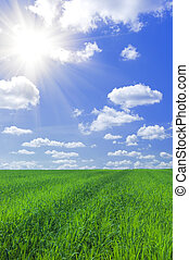 błękitny, polna trawa, niebo