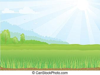 błękitny, promienie, sky., światło słoneczne, ilustracja, pole, zielony