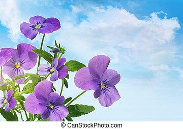 błękitny, purpurowe niebo, przeciw, fioletowe kwiecie