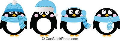 błękitny, sprytny, komplet, ), (, odizolowany, biały, pingwin