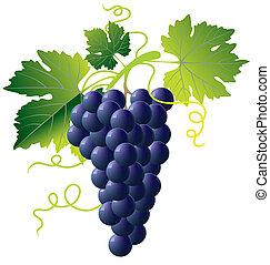 błękitny, winogrona, grono