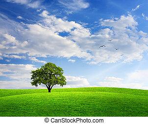 błękitny, wiosna, dąb, krajobraz, niebo