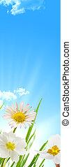 błękitny, wiosna, niebo, tło, słońce, kwiaty