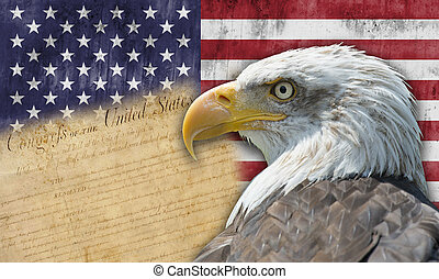 bandera, orzeł, amerykanka, łysy