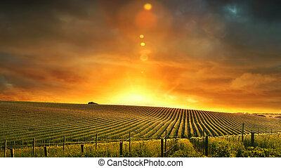 barossa, zachód słońca