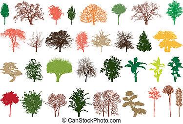 barwa, drzewa