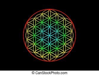 barwny, balance., yantra, jasny, symbol, kwiat, jarzący się, czarnoskóry, życie, mandala, wektor, poświęcony, geometry., harmonia, tło, tęcza, odizolowany