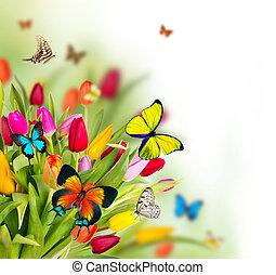 barwny, kwiaty, motyle, egzotyczny, tulipany