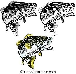bas, odizolowany, fish
