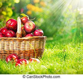basket., organiczny, orchard., ogród, jabłka