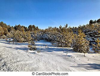 belarus, drewno, zima, słoneczny, dzień