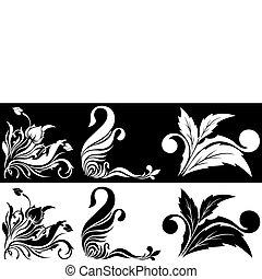 biały kwiat, czarnoskóry, narożny, stuk