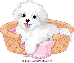 biały pies, puszysty