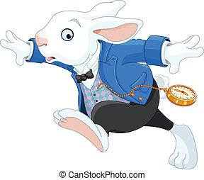 bieg królik, biały
