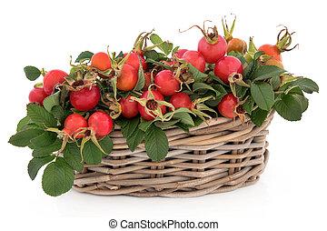biodro, róża, owoc