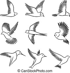 birds., wektor, illustration.