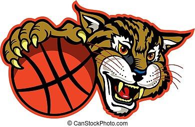 bobcat, koszykówka