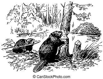 bobry, eurazjatycki