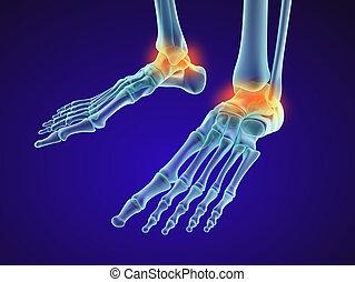 bone., szkieletowy, dokładny, -, ilustracja, xray, medically, injuryd, stopa, stożek, prospekt., 3d