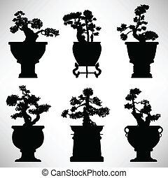 bonsai, roślina, kwiat, drzewo, garnek