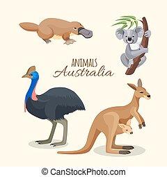 brązowy, australia, zwierzęta, duckbilled, szary, zbiór, kangur, koala
