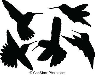 brzęczący, sylwetka, ptak, zbiór