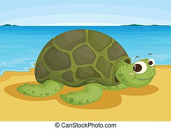 brzeg, żółw, morze