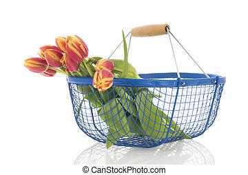 bukiet, tulipany, błękitny, kosz