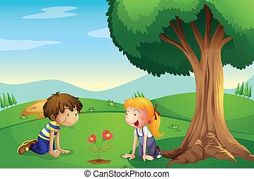 chłopiec, roślina, rosnąć, dziewczyna, oglądając