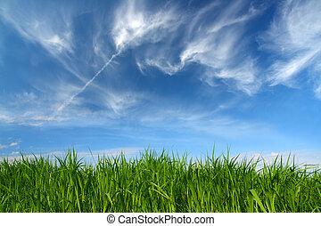 chmury, niebo, zielony, pod, trawa, wełnisty